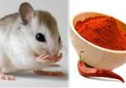 Mẹo tự nhiên đuổi chuột khỏi nhà